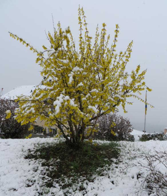 Snow on Yellow