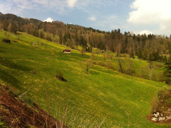 Upper Steinerberg Area