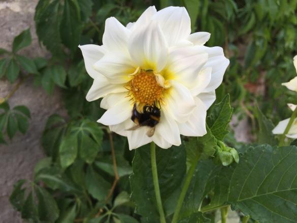 Flower in the Castle Garden