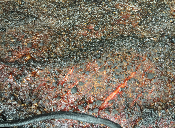 Brisket Surface Detail