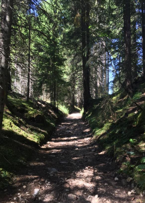 Perlenweg Forest