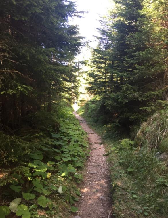 Perlenweg Wald