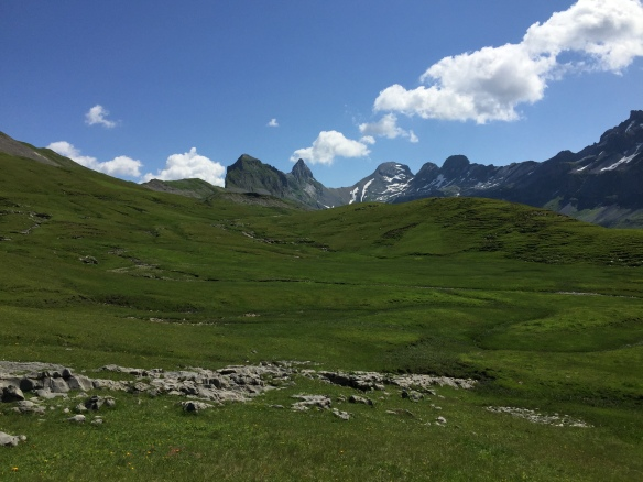Karst Meadows