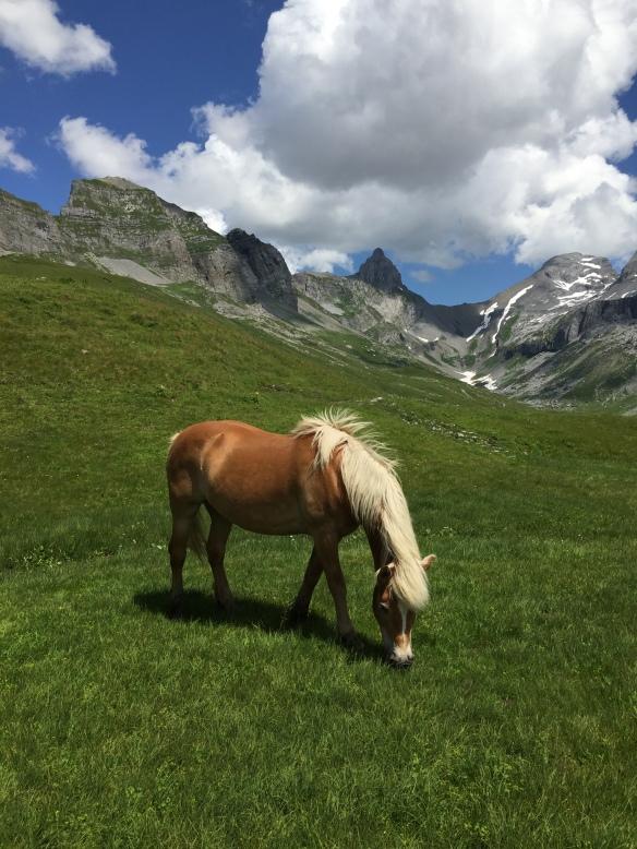 Pferde auf Glattalp