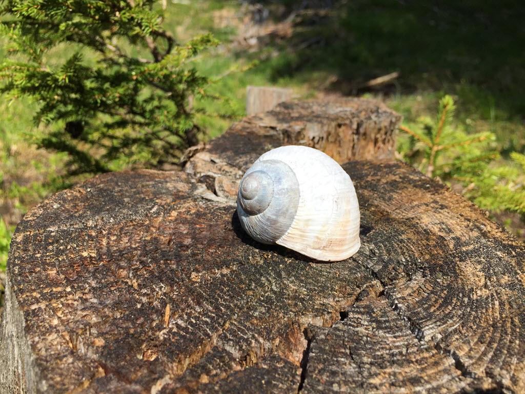 Snail on a trunk