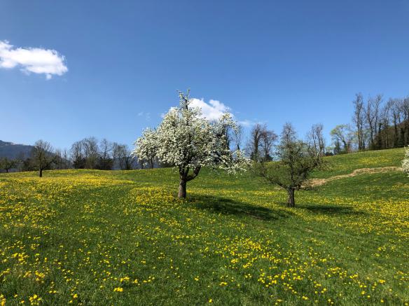 Easter Blooming Tree